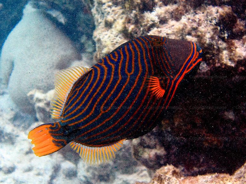CRay-Fish-3663
