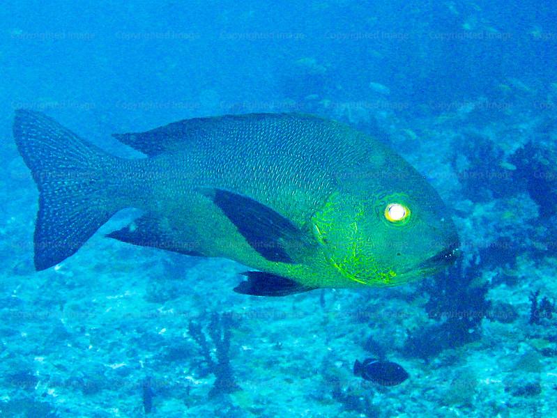 CRay-Fish-0255