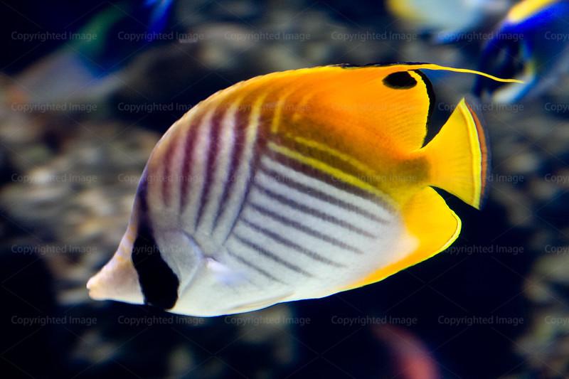 CRay-Fish-2676
