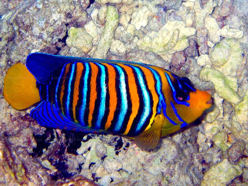 CRay-Fish--18