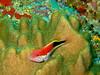 CRay-Fish-065