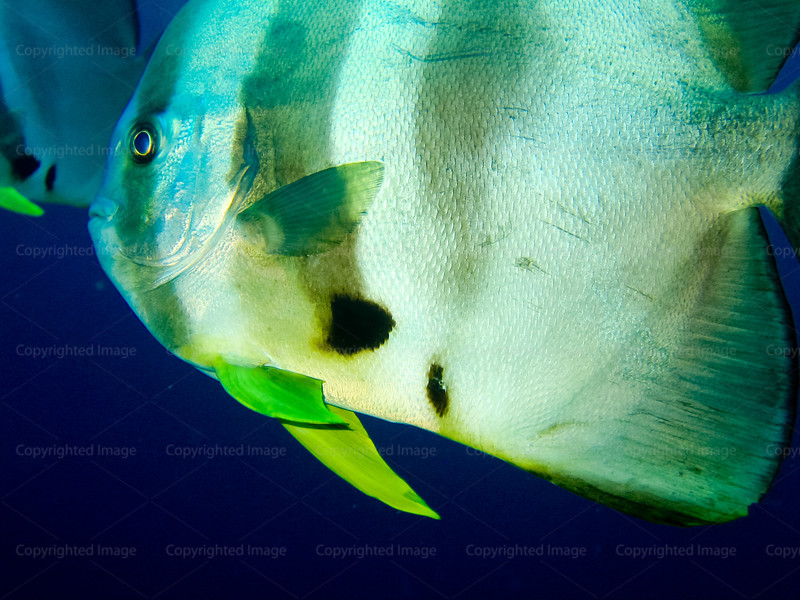 CRay-Fish-0250