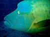 CRay-Fish-125