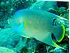 CRay-Fish-0720