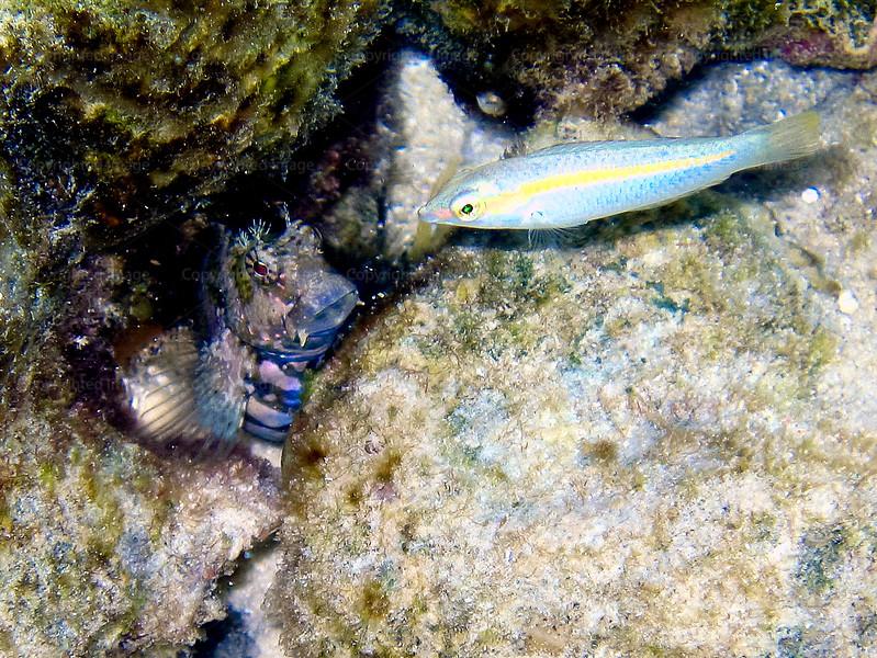 CRay-Fish-0355