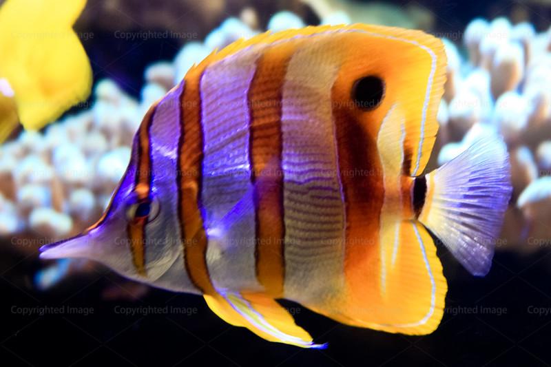 CRay-Fish-2753
