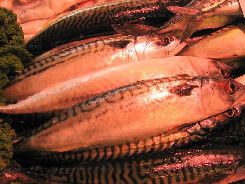 CRay-Fish-1862
