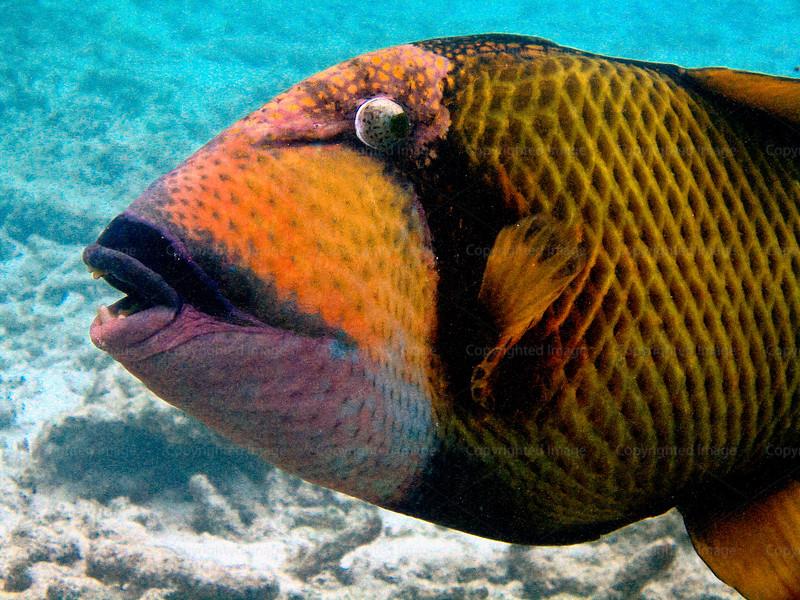 CRay-Fish-5