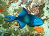 CRay-Fish-134
