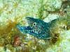 CRay-Fish-0687