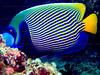 CRay-Fish-0422