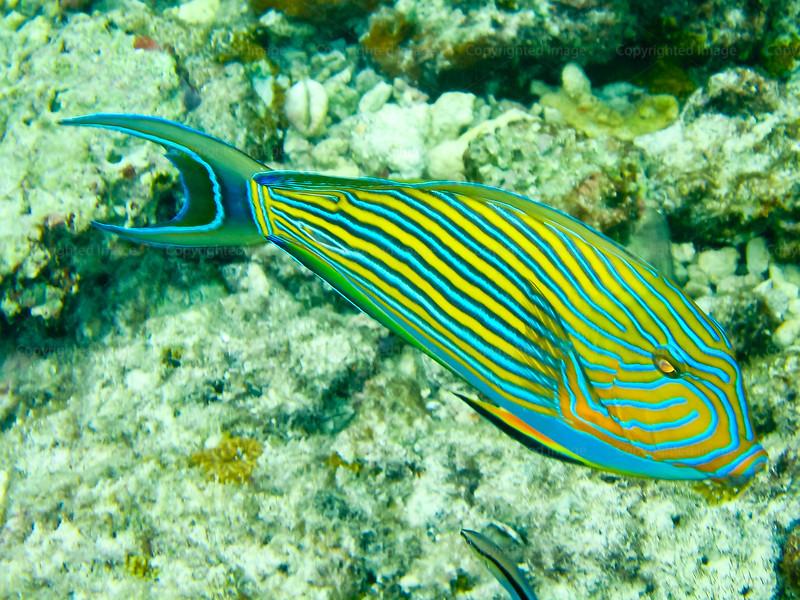 CRay-Fish-0056