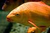 CRay-Fish-2522