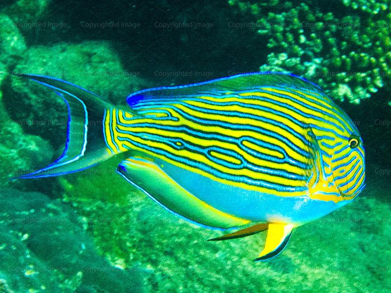 CRay-Fish-1449