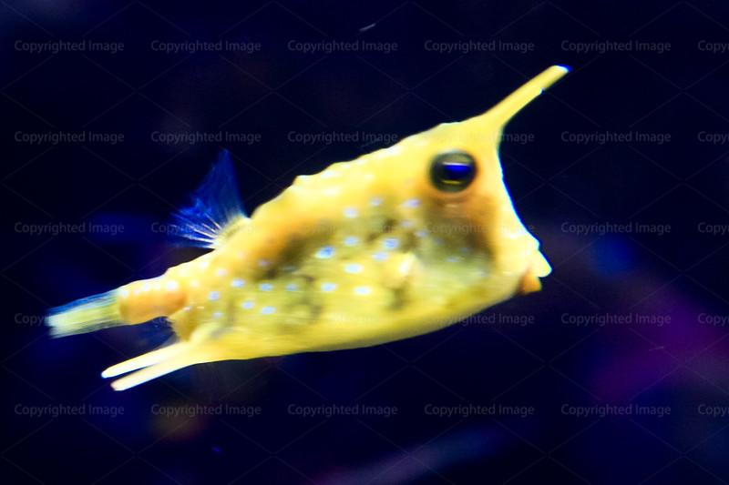 CRay-Fish-2615-2