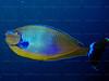 CRay-Fish-144