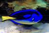 CRay-Fish-2730