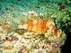 CRay-Fish-167