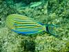 CRay-Fish-0086