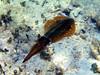 CRay-Fish-0615