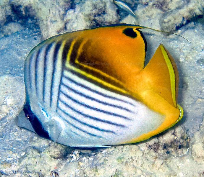 CRay-Fish-0014