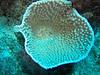 CRay-Fish-2758
