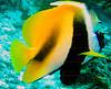 CRay-Fish-0178