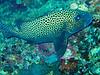 CRay-Fish-2984