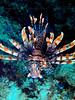 CRay-Fish-1393