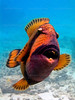 CRay-Fish-