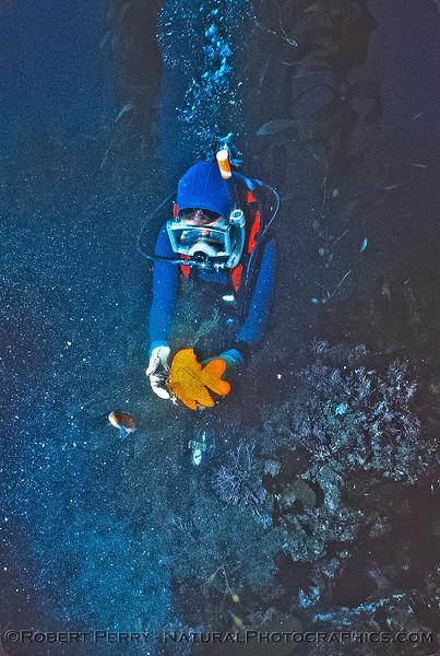 Garibaldi feeding - Dive Log 922 - Anacapa Island.