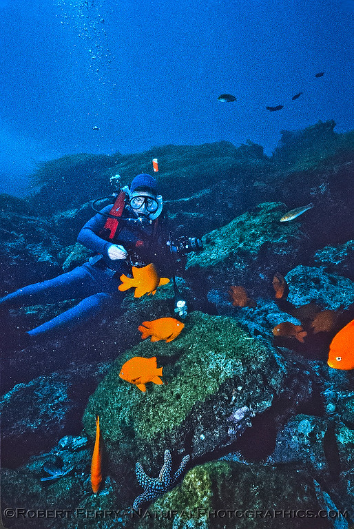 Diver with many Garibaldi - Dive Log 967 - Middle Coronado Island, Baja California.