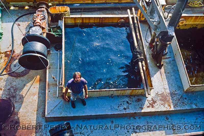 bait boat-Engraulis mordax-1983-01-SM Pier