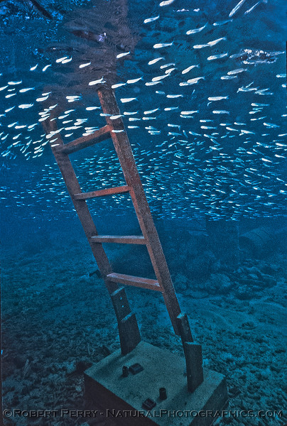 Stairs with fish school-Log 1153-1985-08-Bonaire