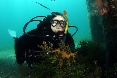 Deb Aston with Seadragon, Phycodurus eques