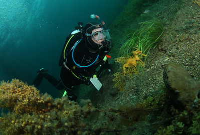 Ted Aston with Leafy Seadragon, Phycodurus eques