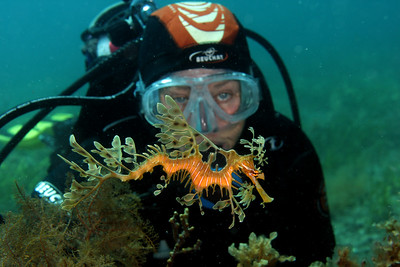 Tricia Culshaw with Leafy Seadragon, Phycodurus eques