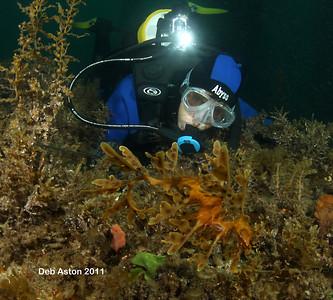 Tricia Culshaw and Leafy Seadragon, Phycodurus eques