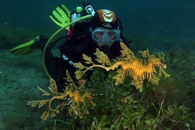 Tricia Culshaw with Seadragon, Phycodurus eques