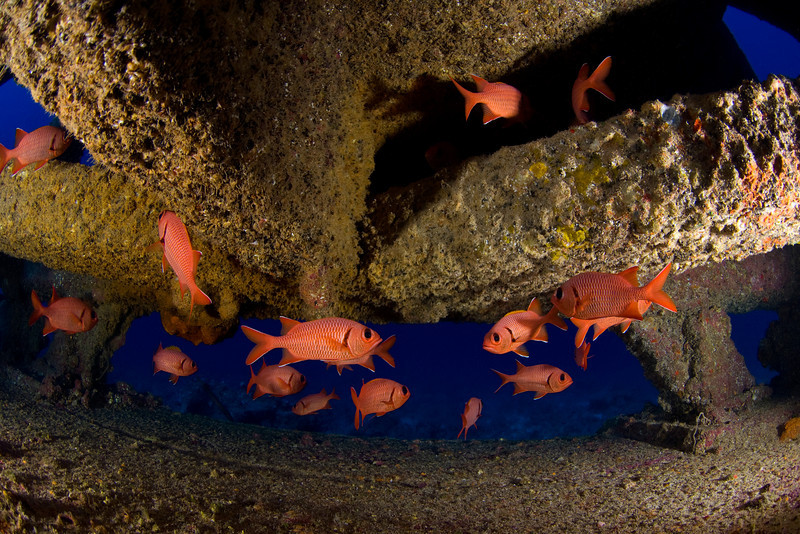 bigscale soldierfish, Myripristis berndti, take refuge beneath underwater structure, Big Island of Hawaii ( Central Pacific Ocean )