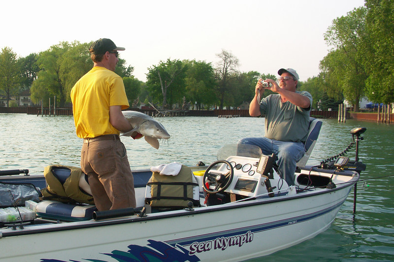 Sturgeon pulled from the North Channel, St. Clair River, Algonac MI May 23, 2007.  Released soon after.