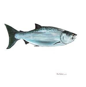 fish-winston