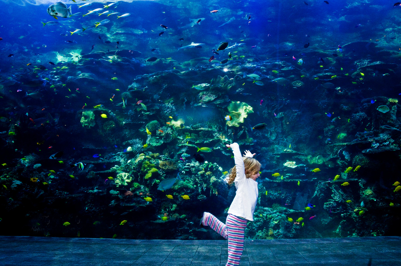 Atlanta Aquiarium Atlanta Georgia :  Cheerful girl dancing in front of fish .