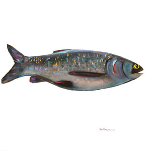 fish-barnaby