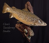 24 inch 7lbs PA brown trout skin mount