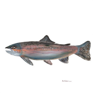 fish-humphrey