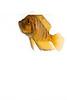 African Cichlid - Altolamprologus Compressiceps