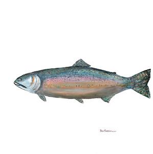fish-jonah