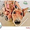 Pet-A-Palooza-064
