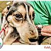 Pet-A-Palooza-080
